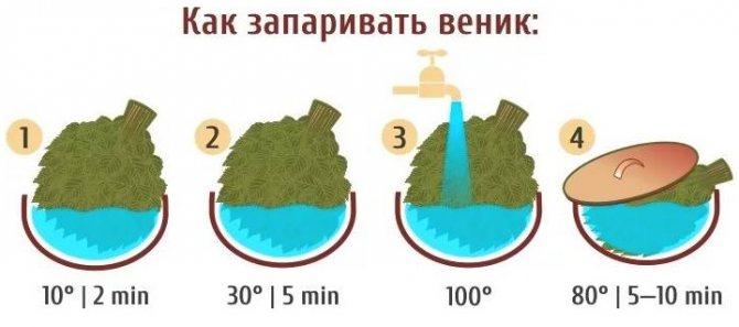 Как правильно запаривать веник для бани, березовый, дубовый, можжевеловый