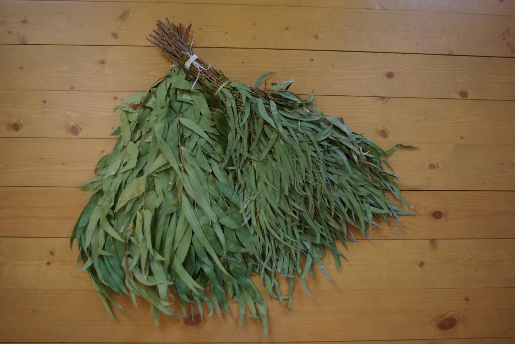 Как пользоваться эвкалиптовым веником для бани?