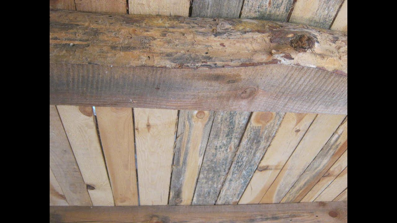 Как убрать плесень с деревянных поверхностей в домашних условиях