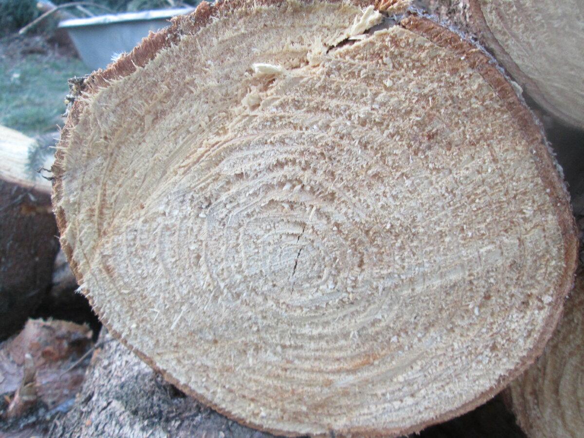 Биологическая защита древесины от влаги, насекомых и гниения |