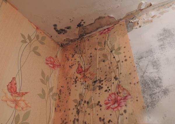 Как удалить плесень со стены в жилом помещении народными методами