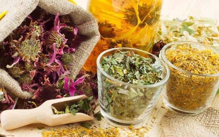 Травы для бани и настои своими руками: применение