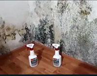 Как вывести грибок на стене в квартире, эффективно раз и навсегда