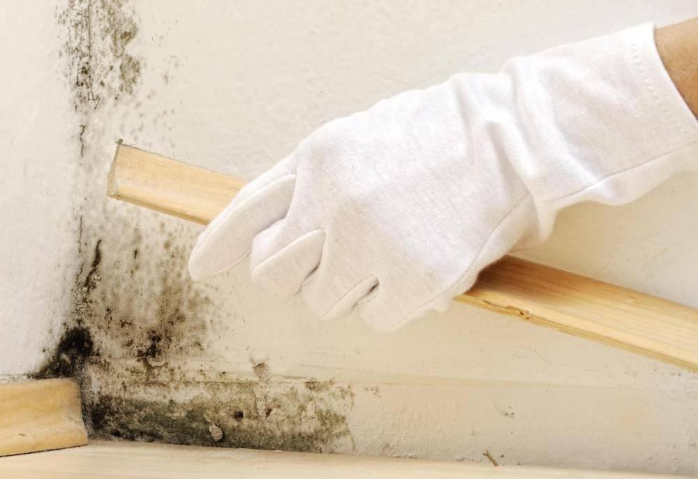 Эти 12 признаков указывают на скрытую плесень в доме, из-за которой вы болеете :: инфониак