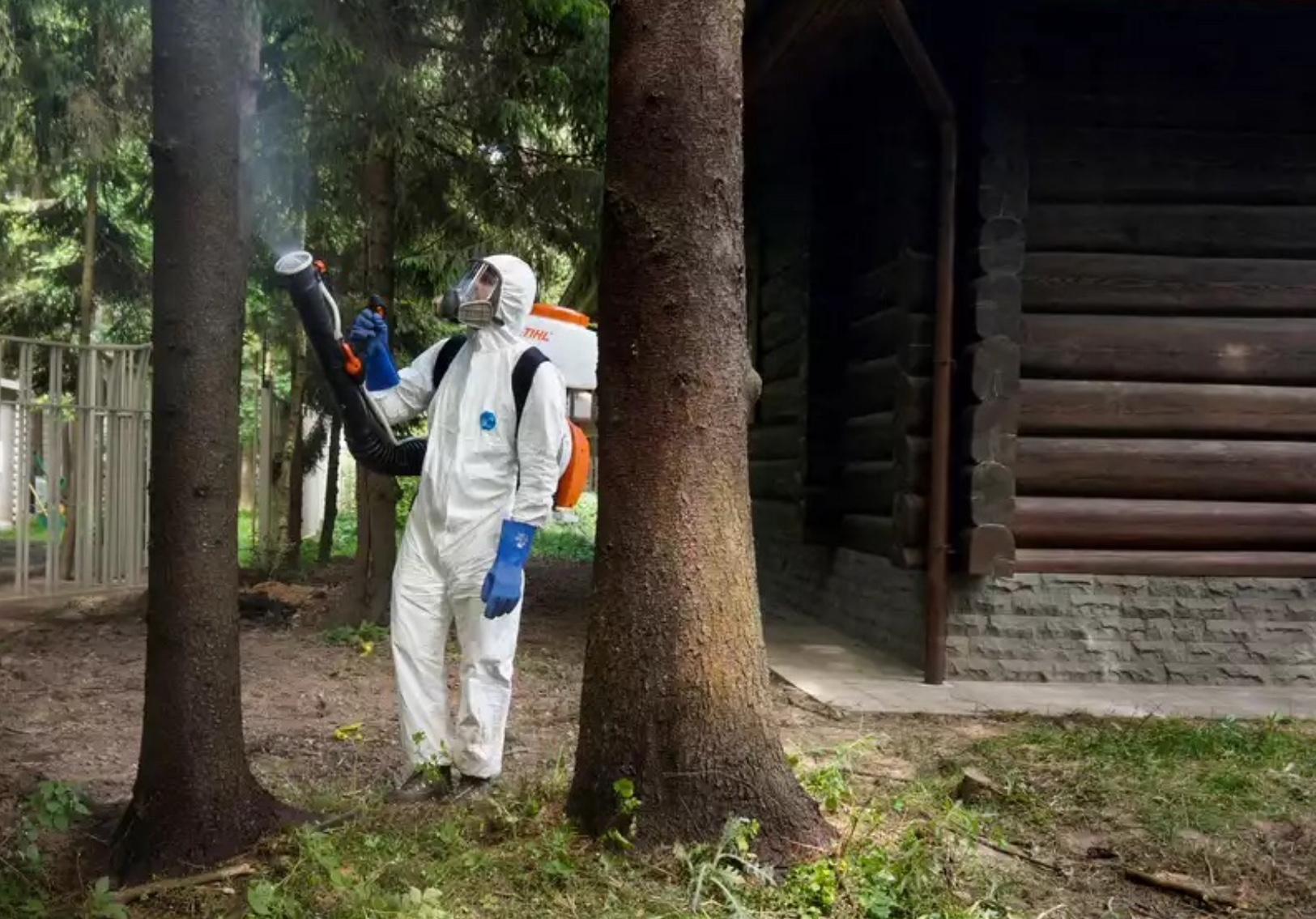 Как защитить древесину от паразитических насекомых на долгие годы? - уничтожение вредителей