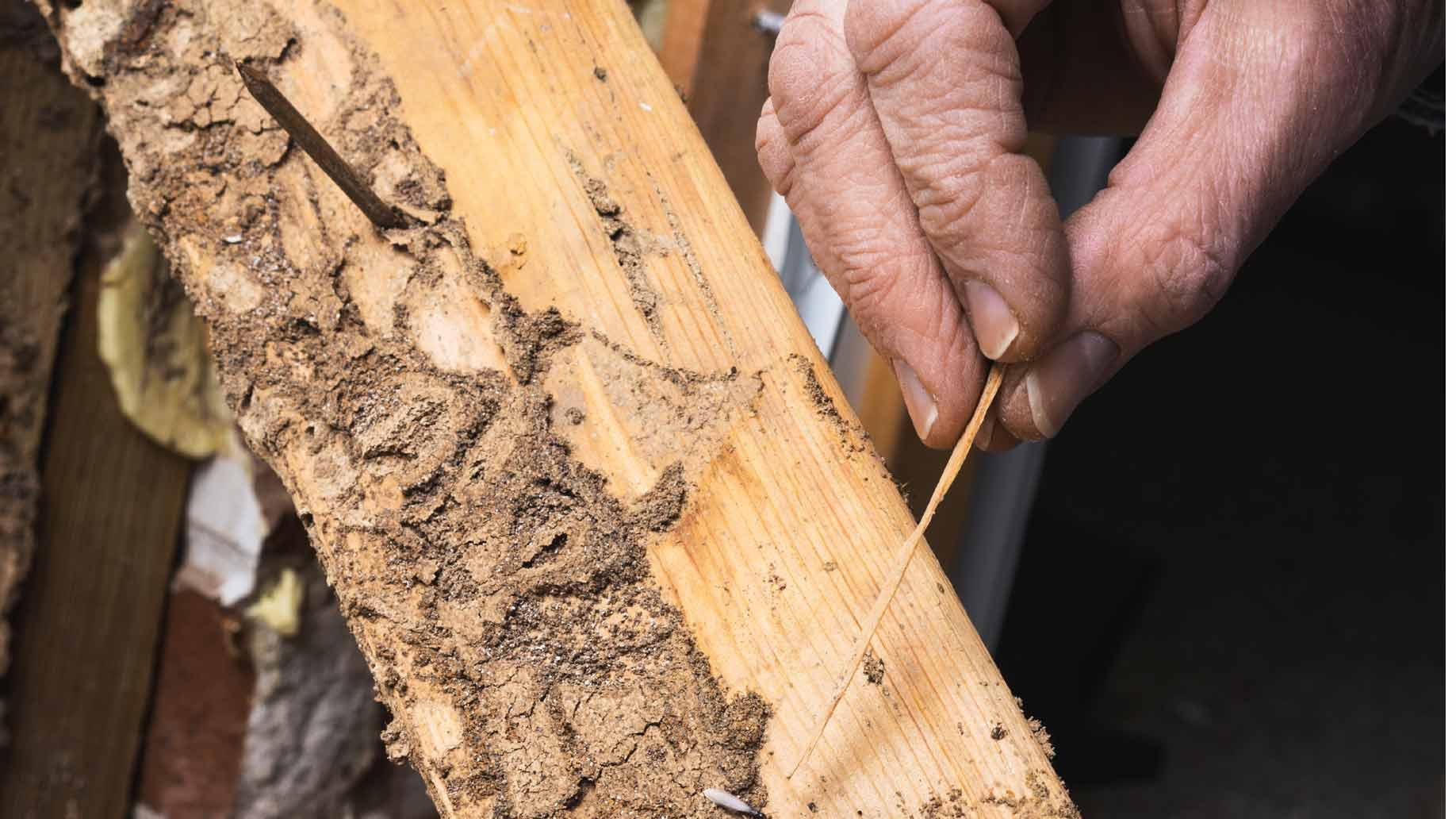 Как защитить древесину от насекомых?