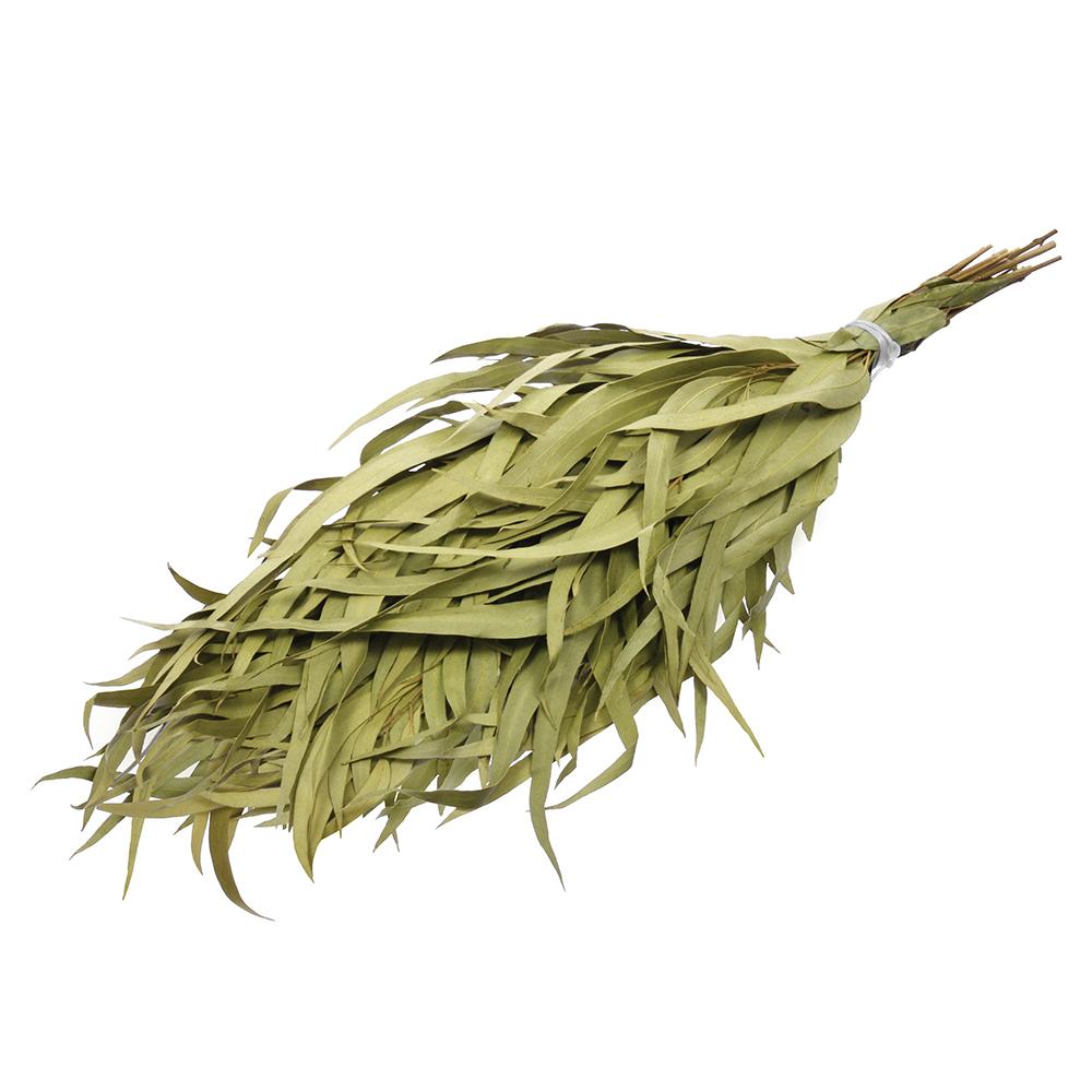 Эвкалиптовый веник для бани – полезные свойства и массаж