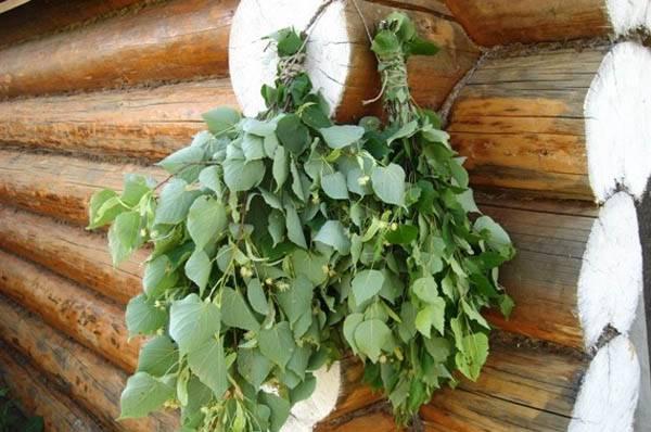 Правильный веник для бани – какой выбрать, как вязать и запаривать - огород, сад, балкон - медиаплатформа миртесен