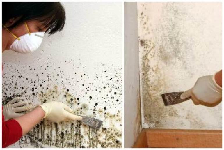 Грибок в квартире: как избавиться, чем опасен, средства для выведения и др