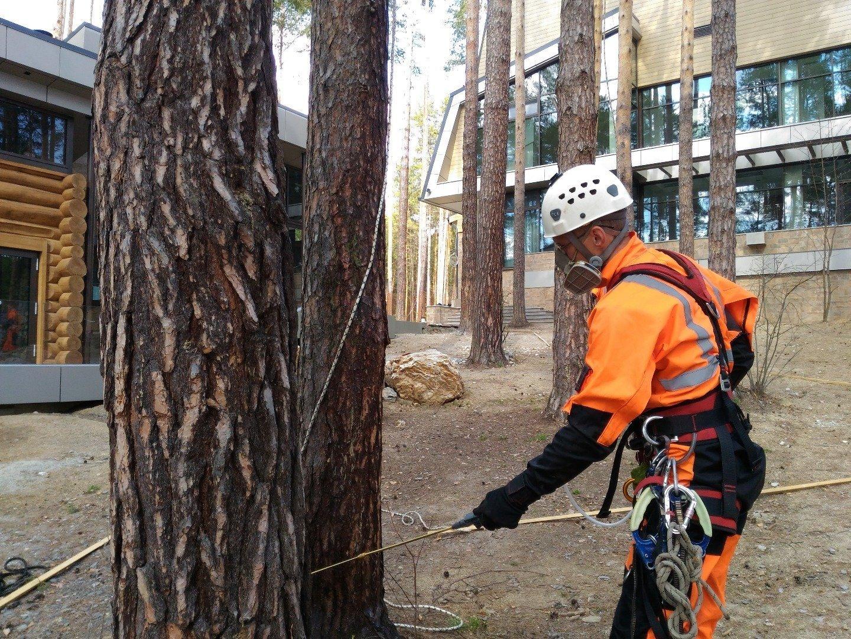 Защита древесины от гниения, насекомых, возгорания и влаги своими руками