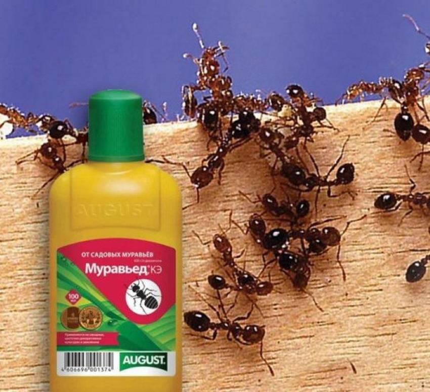 Как самостоятельно избавиться от муравьев в бане