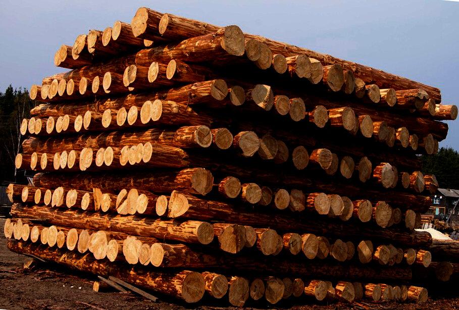 Дерево для бани и сауны: выбираем древесину для строительства и отделки бани, а также средства, чем обработать материал