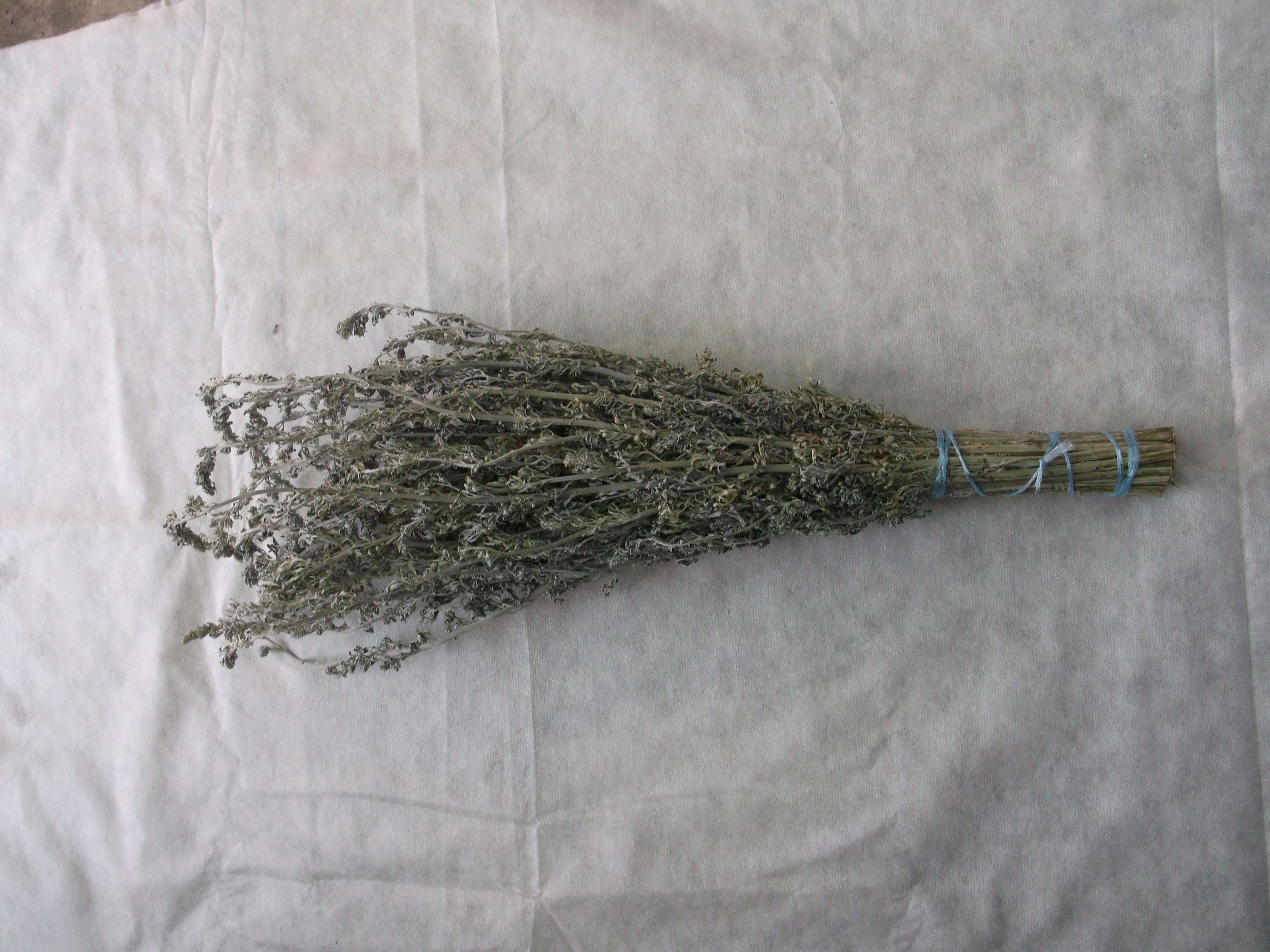 Полынь в бане: виды и свойства травы, польза и показания к применению, противопоказания, особенности веника из полыни, видео-обзор