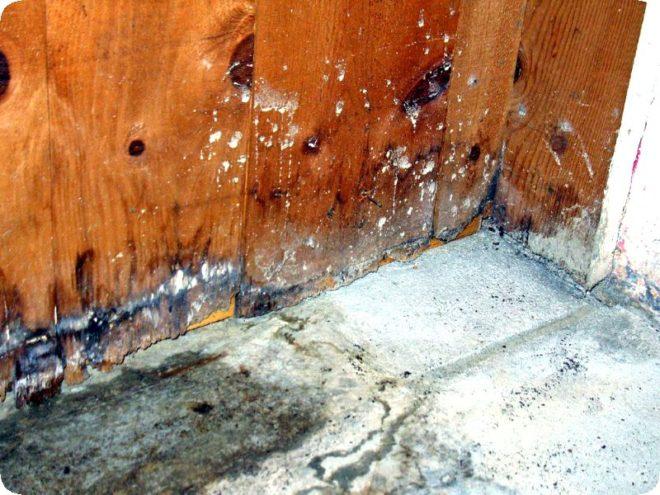 Как избавиться от плесени в погребе: как убрать грибок в подполе деревянного дома, как бороться, народные средства, как вывести из подвала