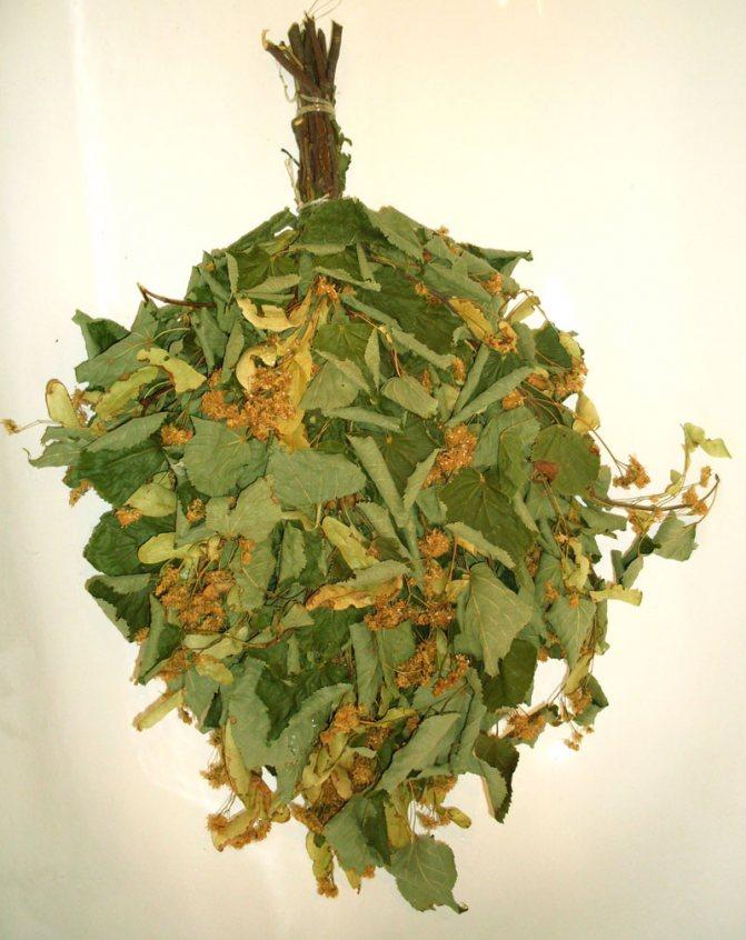 Веник из липы полезные свойства и противопоказания