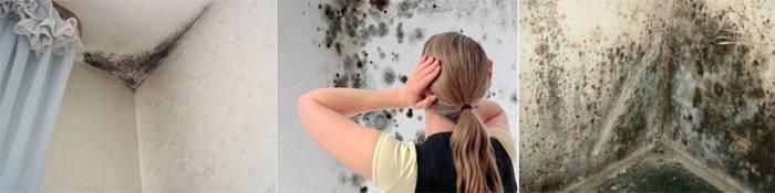 Как избавиться от плесени на стенах в квартире и доме навсегда, с помощью народных средств и бытовой химии
