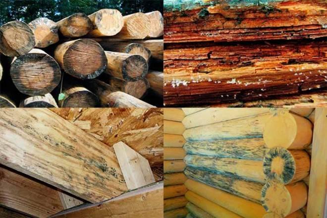 Обработка дерева пропитками от влаги, гниения и насекомых