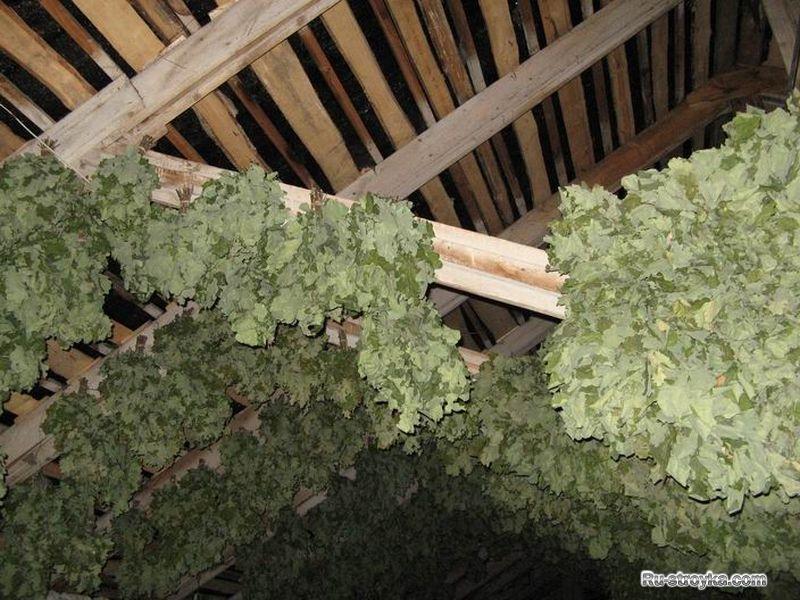 Когда и как заготавливают дубовые веники для бани