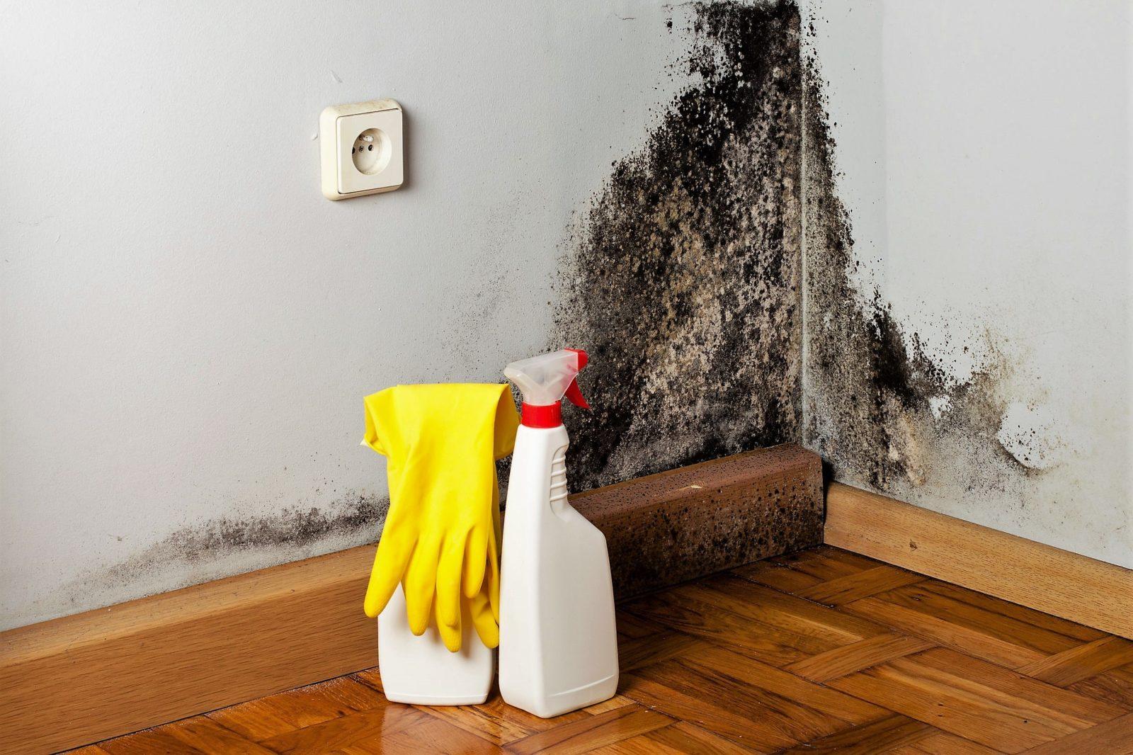 Чем обработать стену от грибка и плесени