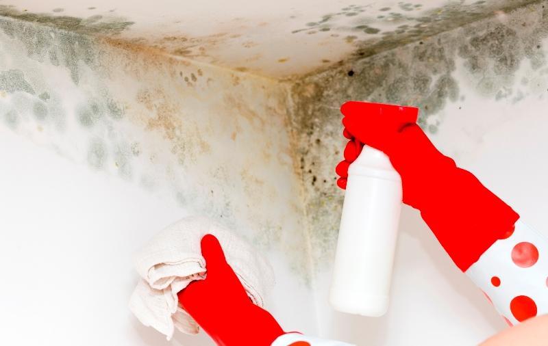 Как удалить плесень со стен в квартире и доме: 25 химических и народных средств
