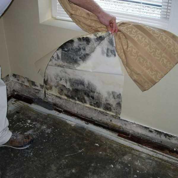 Как избавиться от плесени на стенах народными средствами. избавление от черной плесени навсегда, фото