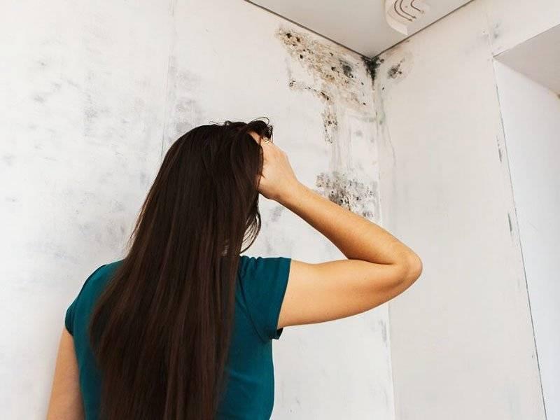 Как избавиться от плесени на стенах своими руками средства