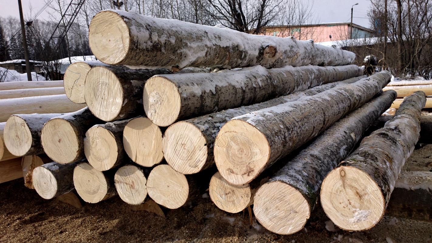 Дерево для строительства дома - обзор строительного материала