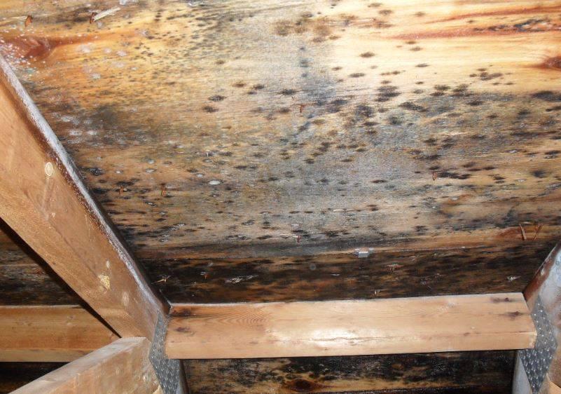Обработка древесины от грибка и плесени народными и бытовыми средствами в домашних условиях