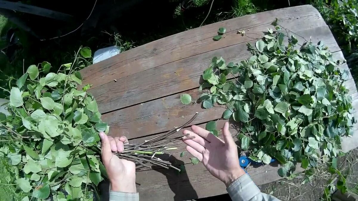 Березовые веники: заготовка, сроки, хранение, фото
