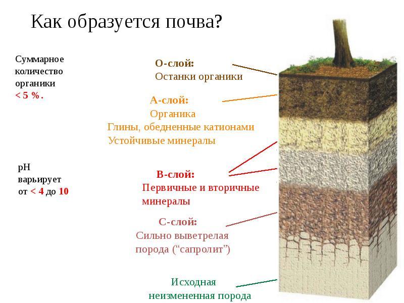 Как определить грунт на участке перед укладкой фундамента