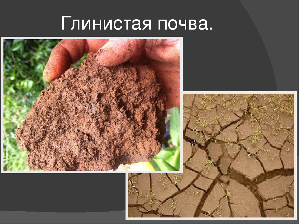 Виды почв: какие бывают почвы, как определить состав почвы