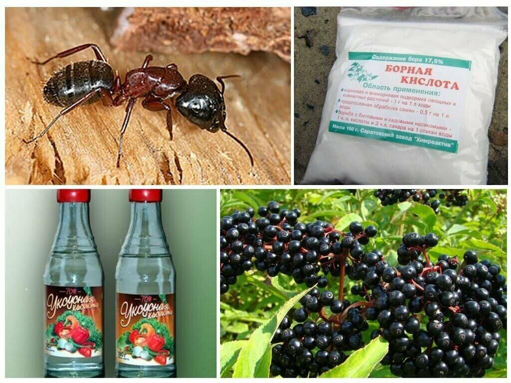Как избавиться от муравьев в бане: выводим народными средствами