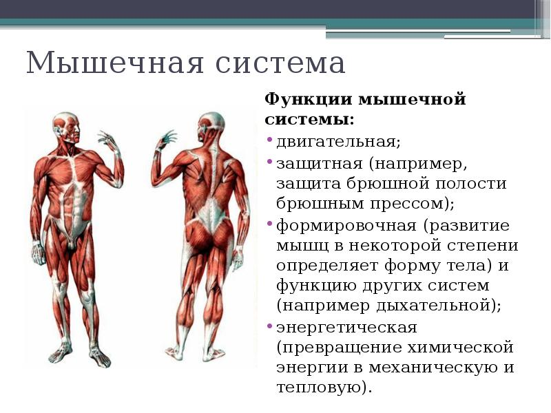 Как баня воздействует на различные органы и системы организма