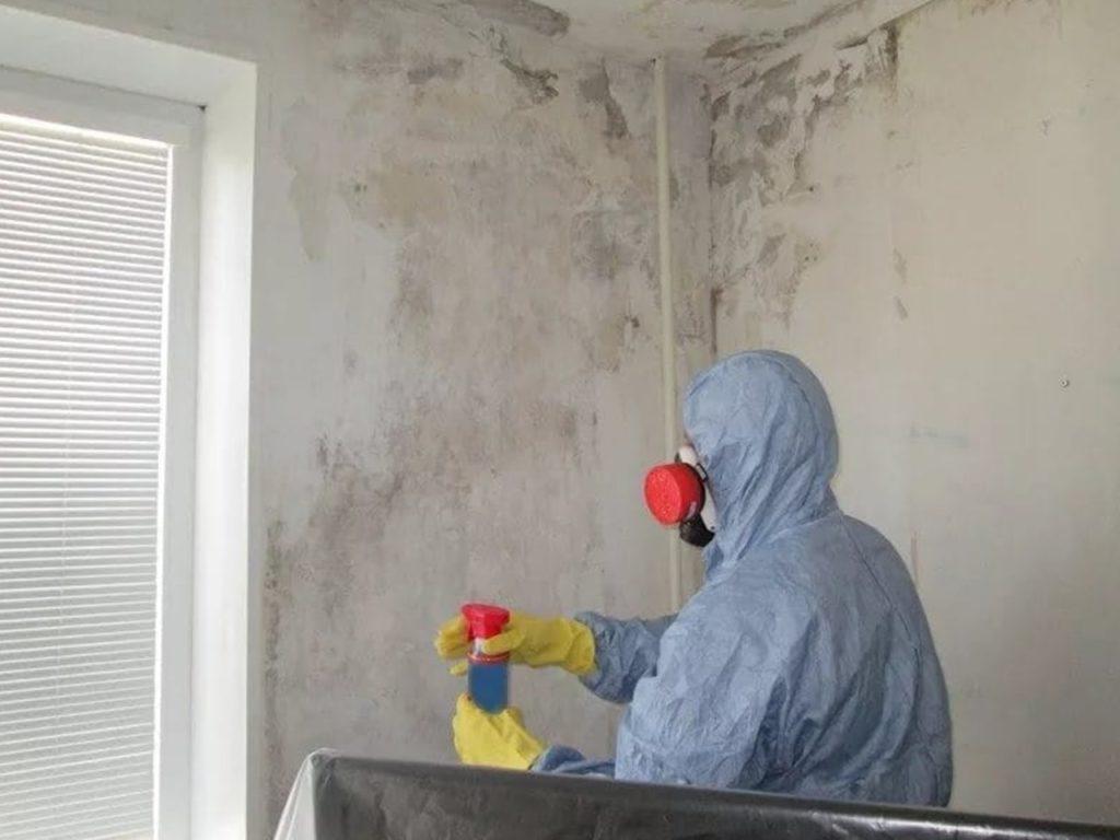 Борьба с плесенью: как удалить грибок со стены в квартире народными средствами
