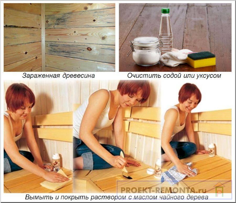 Избавляемся от грибка в бане. современные и народные методы