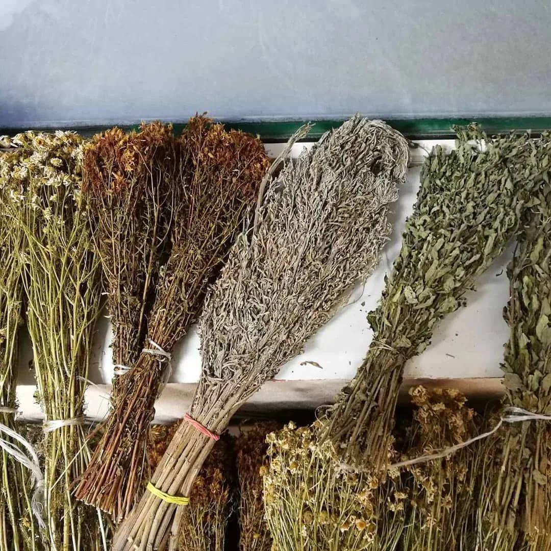 Как сушить веники для бани из березы
