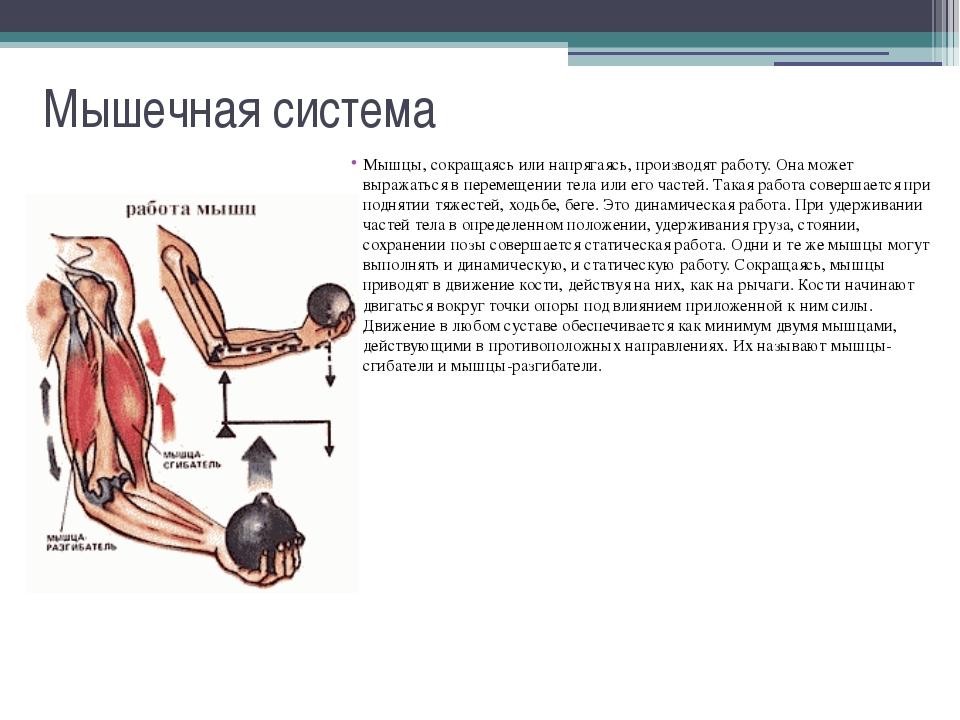 Польза и вред бани для организма. как очистить организм баней. восстановление организма и улучшение кровообращения при помощи бани. польза и влияние бани на организм человека