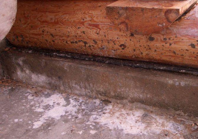 Плесень в бане: чем обработать стены и как бороться с грибком в парилке