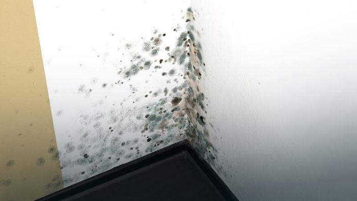 Грибок на стенах – причины появления и как избавиться