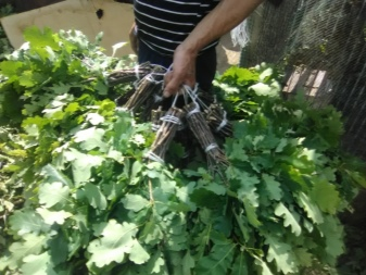 Когда заготавливают дубовые веники для бани: режут, собирают, сушат