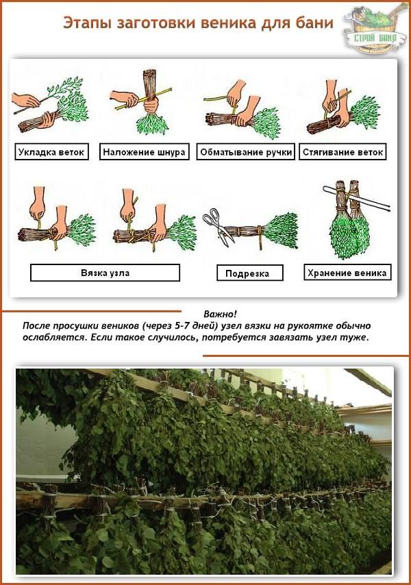 Как правильно вязать банные веники