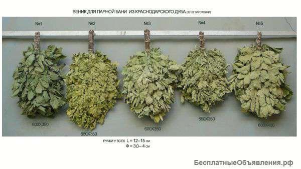 Веники для бани - виды и применение