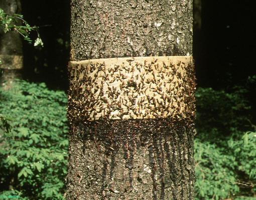Чем обработать дерево от влаги: виды растоворов, как наносить средство для защиты древесины