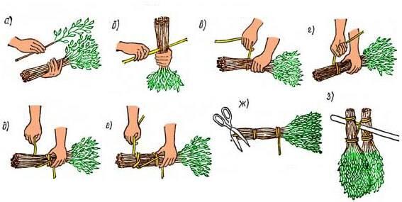 Заготовка веников для бани: сроки и как правильно заготавливать.