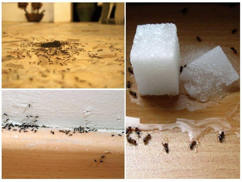 Муравьи в бане: как избавиться