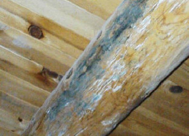 Как избавиться от плесени в деревянном доме методы борьбы