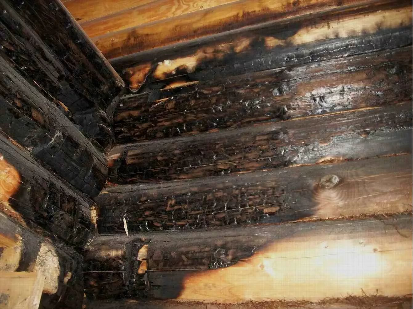 Что поможет уничтожить плесень на древесине?