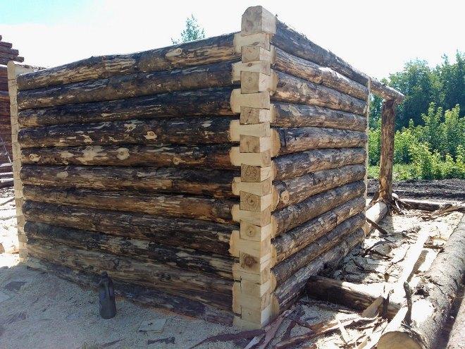 Как построить баню из осины: особенности деревозаготовки + монтажные работы