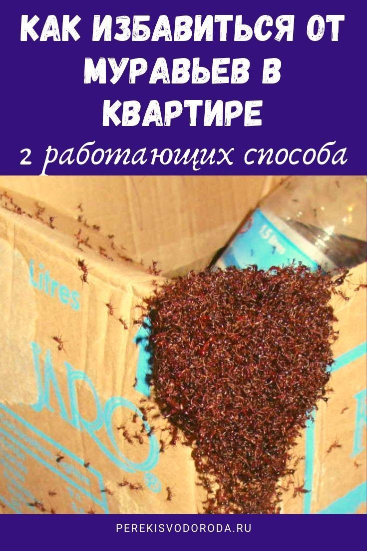 Как избавиться от муравьев в бревенчатой бане — чем их травить, обзор популярных средств